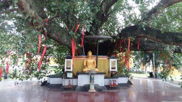 Patung Buddha di Pohon Besar Vihara Watugong